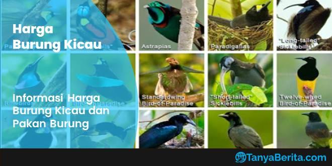 Daftar Harga Burung Kicau
