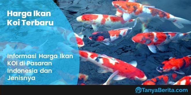 Daftar Harga Ikan Koi Lokal dan Impor Terbaru