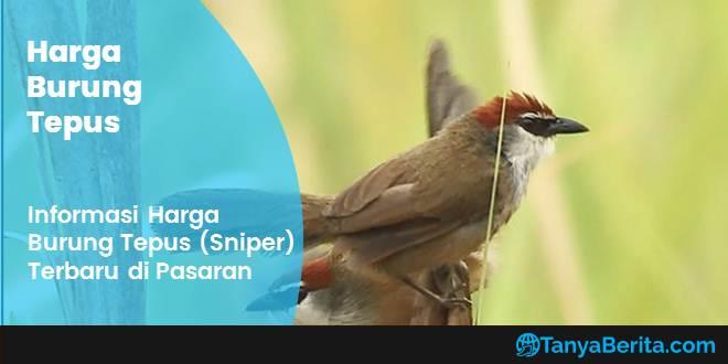 Harga Burung Tepus (Sniper) Terbaru